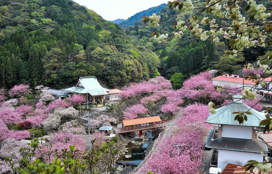 Oita-Japon