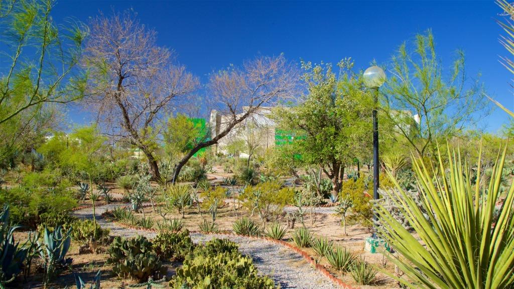 ciudad chihuahua parque pradera
